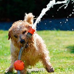 perro-agua-verano