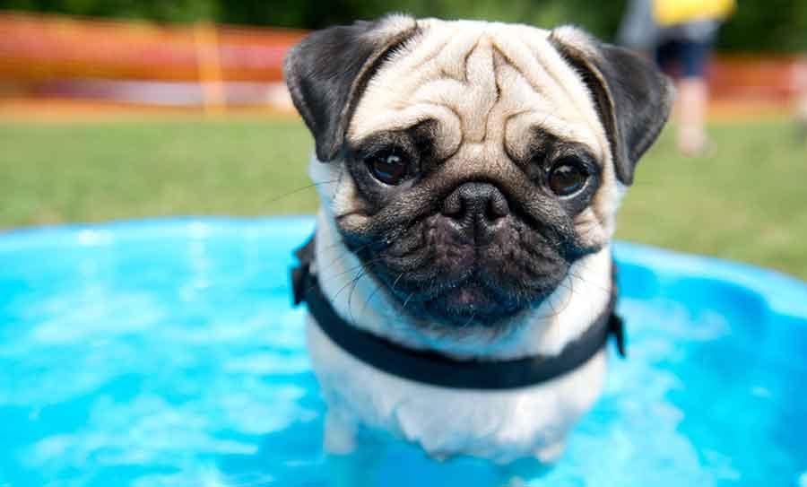 perro - refrescandose - calor