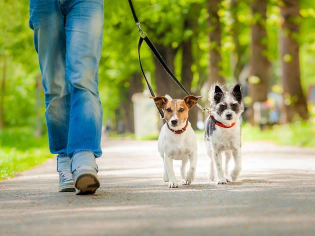 perros - paseando