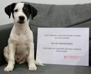 dog buddy - no me abandones