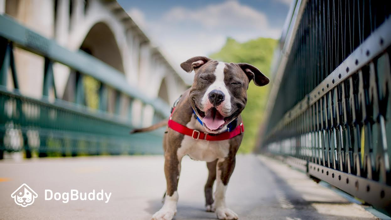 Dogbuddy - servicio de cuidado de mascotas