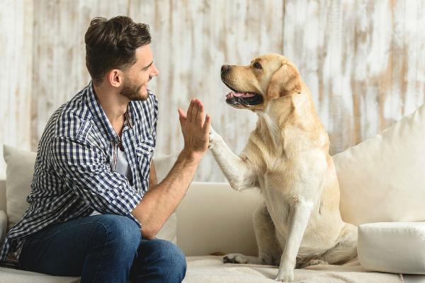 Perro solo en casa - Consejos Patasbox