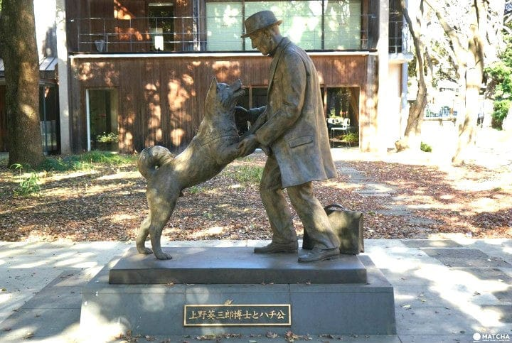 Hachiko - perro famoso - Patasbox