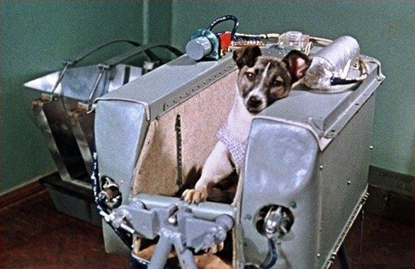 Laika - perro famoso - Patasbox