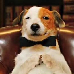 Pancho - perro famoso - Patasbox