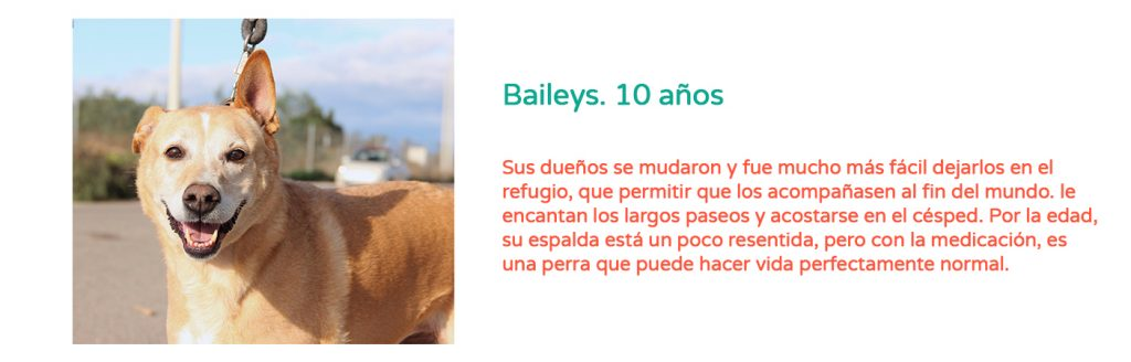 #Elveranoencasa_Baileys