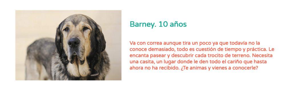 #Elveranoencasa_barney