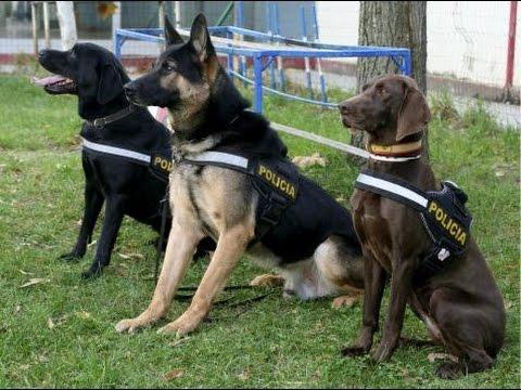 Perro policia Dejamos Huella