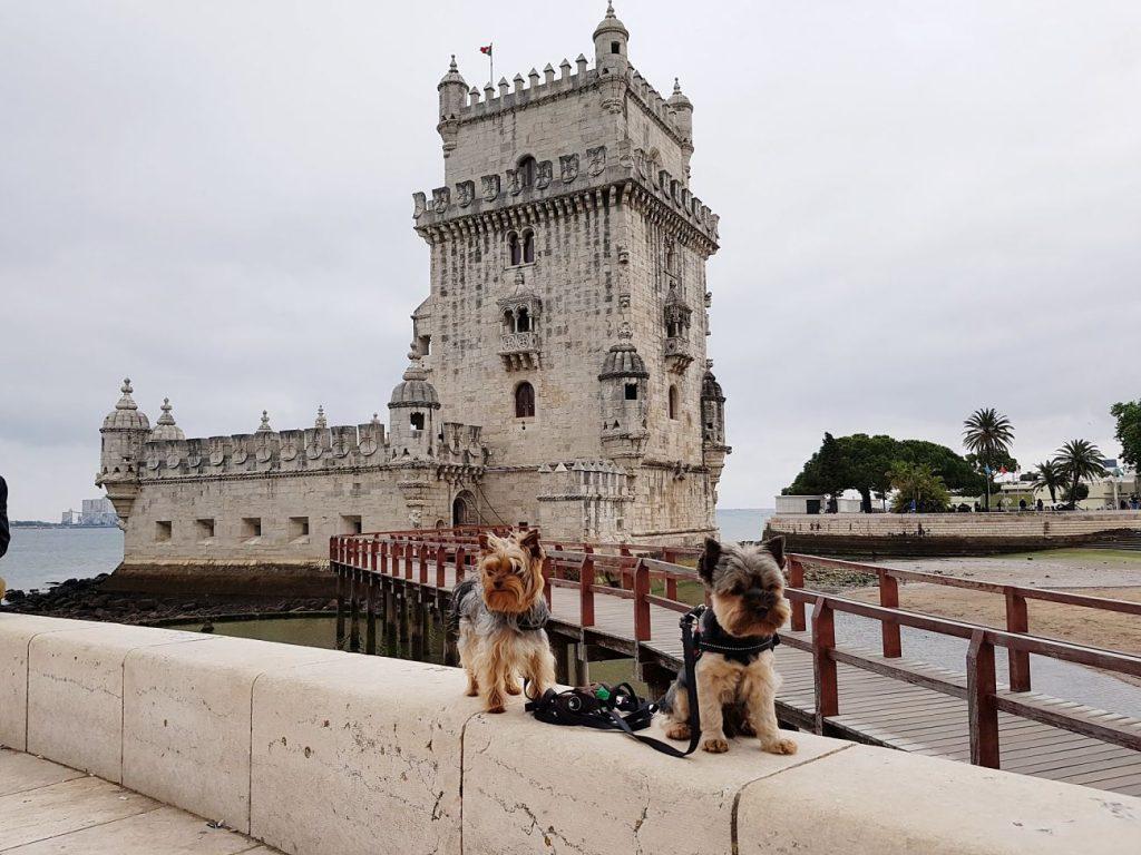 Perros en la Torre de Belem - Lisboa