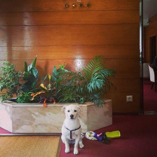 Perro en Casual Hoteles