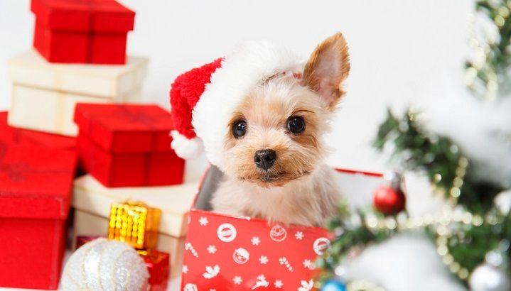 animales como regalo de navidad