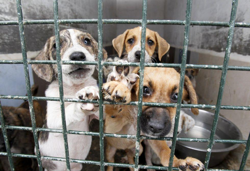 animales buscando adopción