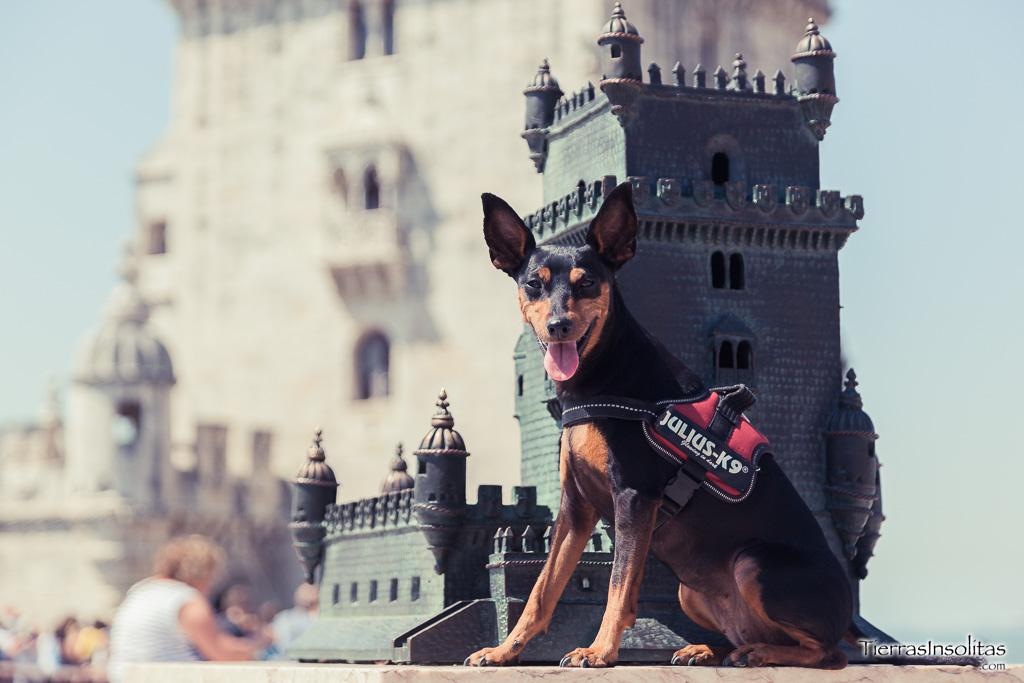 Perro en la Torre de Belem - Lisboa