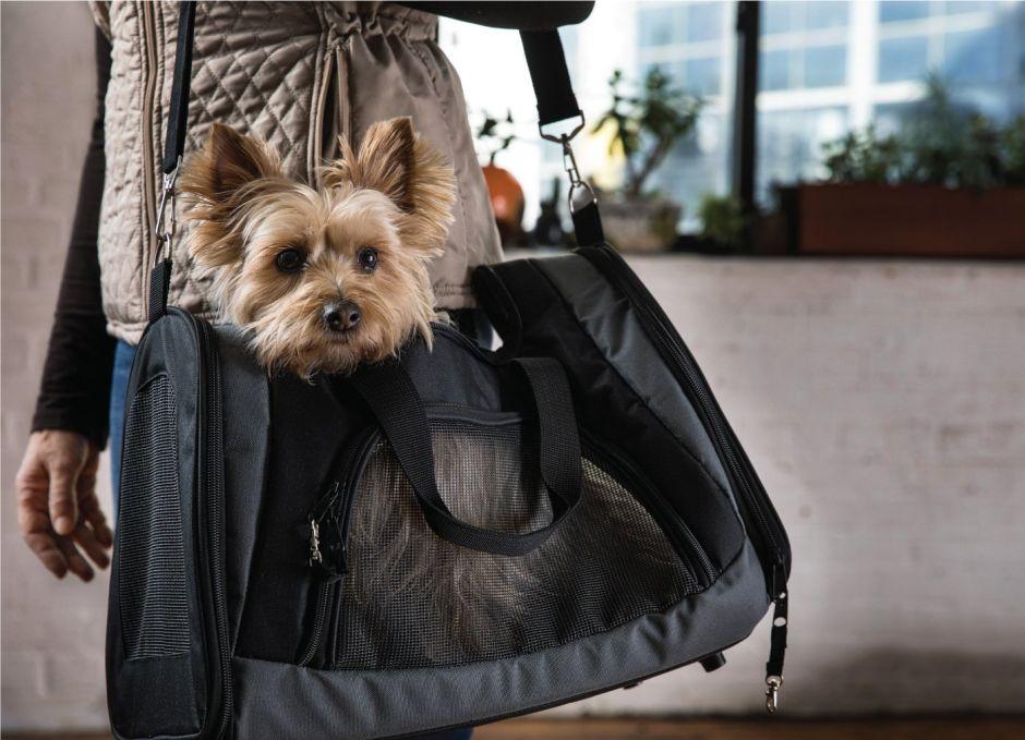 viajar con tu perro a ciudades dogfriendly