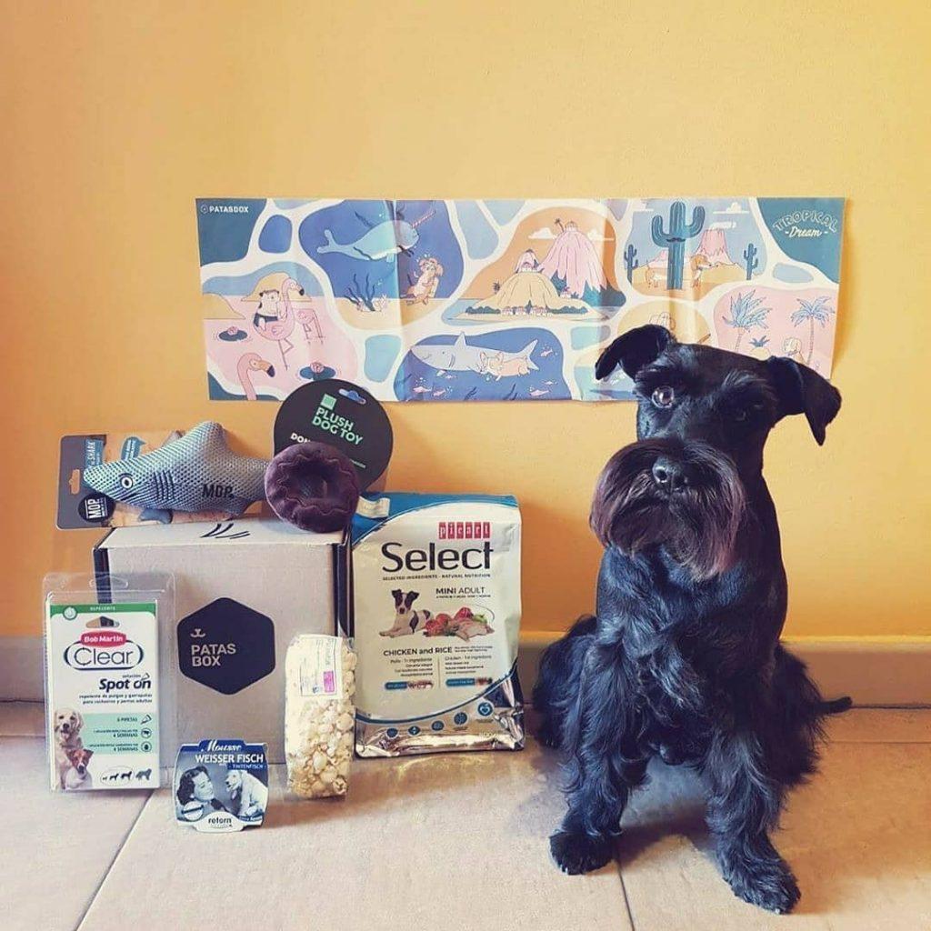 Patasbox hace feliz a tu perro mes a mes