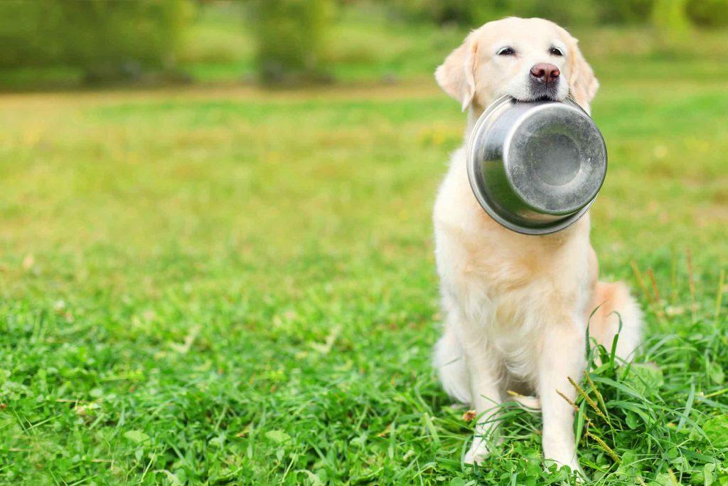 Recetas-caseras-croquetas-para perros