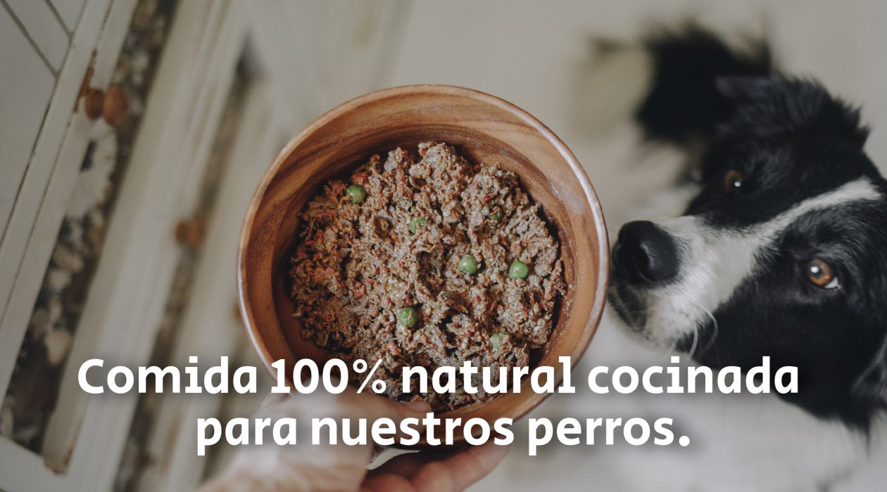 Alternativa_al_pienso_Patasbox_dogfydiet