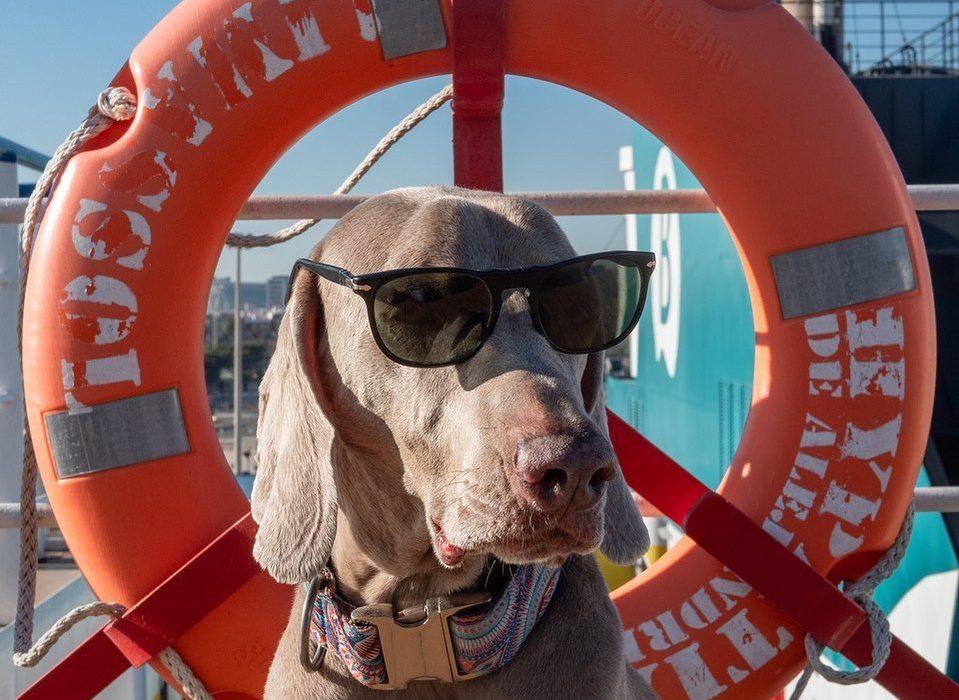 Patasbox_balearia_viajar_perros