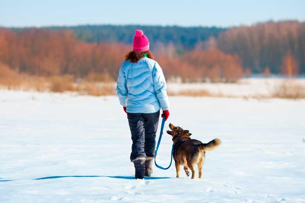 el_frío_y_los_perros