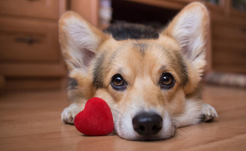 san_valentin_con_mi_perro