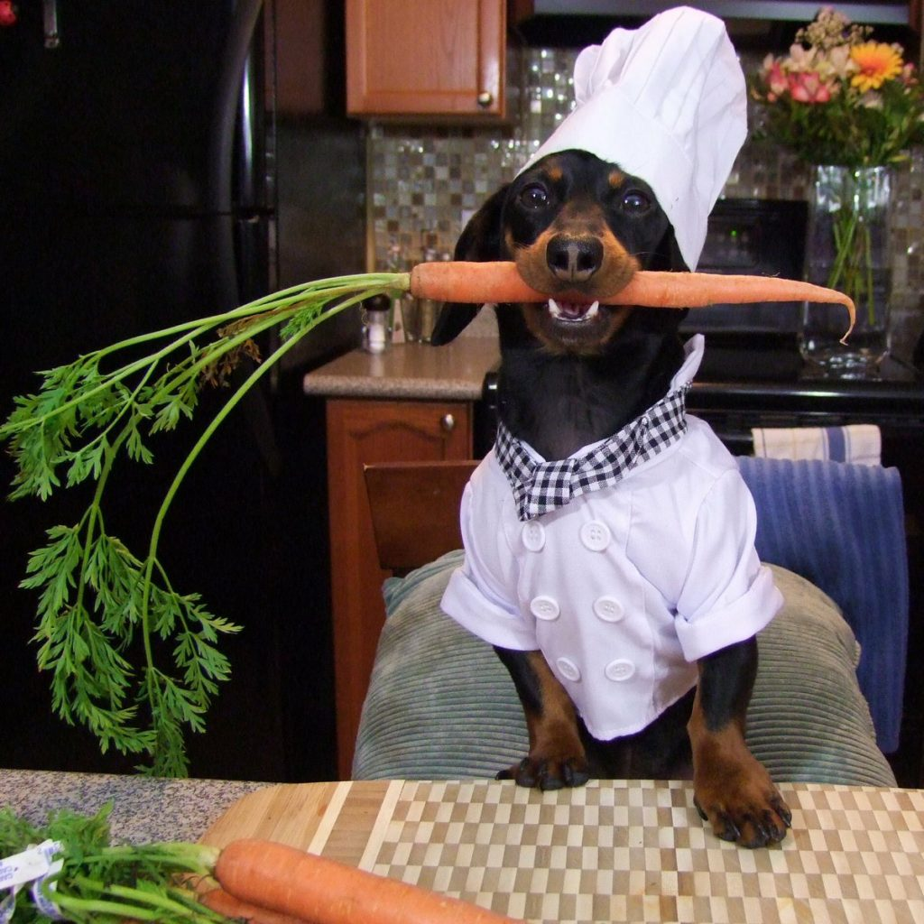planes_semana_santa_con_tu_perro