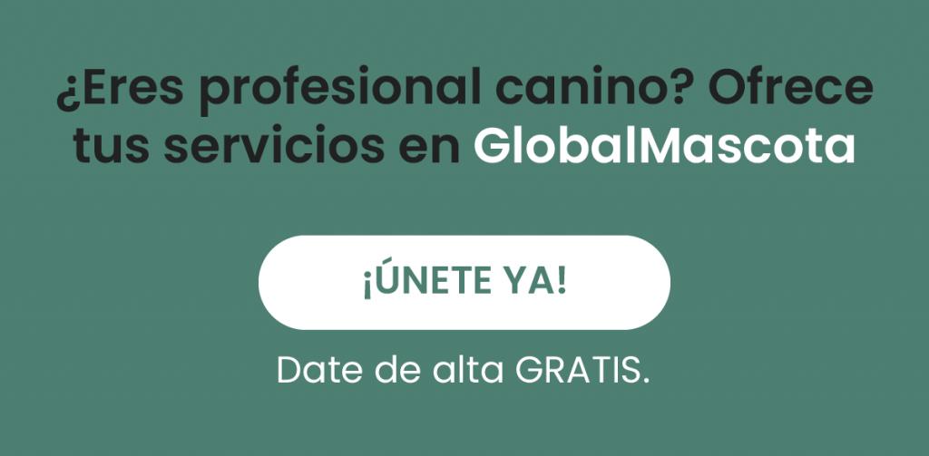 GlobalMascota_Patasbox